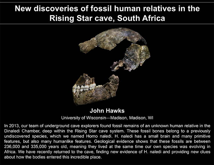 Plenary: NEW DISCOVERIES OF FOSSIL HUMAN RELATIVES IN THE RISING STAR CAVE, SOUTH AFRICA